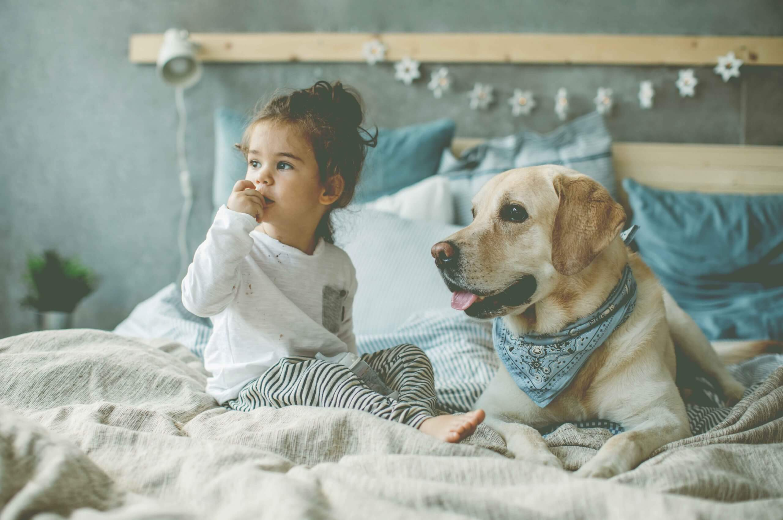 Little boy and his dog on bed, it is sunday morning and they just wake up.
